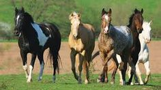 Image result for horses