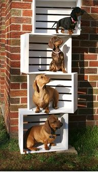 DIY Cat tree???? We could easily attach these and mount it to a wall/corner--add sisal rope to a couple of sides and hang a few toys, attach some cushions with velcro for easy cleaning...
