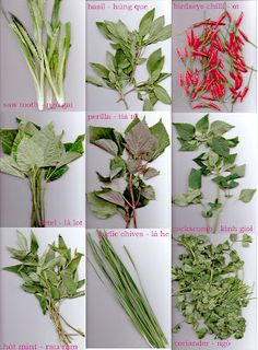 Some common Vietnamese herbs. Good to know the English names for the herbs :)