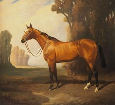 Bay Thoroughbred Vintage Painting by James Palmer Card - horse animal horses riding freedom Gaucho, Horse Portrait, Pencil Portrait, Prince, Thoroughbred Horse, Vintage Horse, Racehorse, Equine Art, Equestrian Style