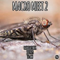 Been getting request for another Macro Meet so here you go! 🐝🐞🐛🐜🕷 Group Photo at 1015 Then explain about the Small Contest will be having for some Cool Ass Prizes. #lajollalocals #sandiegoconnection #sdlocals - posted by PADAON PHOTOGRAPHY  https://www.instagram.com/padaon_photography. See more post on La Jolla at http://LaJollaLocals.com