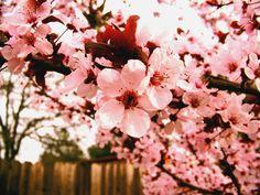 Shyt Style: Symbolize Japanese Cherry Blossom
