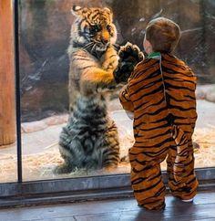 大きくても「やはり猫なんだなぁ」と思う、ネコ科の動物たちのキュートな写真20枚:らばQ