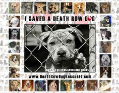 We have the most wonderful 2015 calendars ready now--Proceeds will go to help us to get so many more innocent dogs and puppies out of the pounds alive and into new loving homes--Please SHARE AND ORDER 1 for yourself or as a Unique Gift of Love--God Bless You--http://www.facebook.com/l.php?u=http%3A%2F%2Fwww.createphotocalendars.com%2FStore%2FI%2BSaved%2BA%2BDeath%2BRow%2BDog%2B2015-4254720807&h=EAQGBwqZL