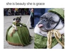 She is beauty she is grace she has... A PUG FACE!!!