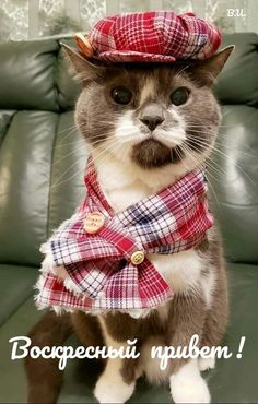 Cute Cats, Funny Cats, Cat Hat, Here Kitty Kitty, Your Best Friend, Animal Photography, Cats And Kittens, Christmas Crafts, Cute Animals