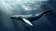 Petition · Barack Obama, Keith Ellison, Amy Klobuchar, Al Franken: Put an End Illegal Whaling · Change.org