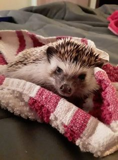 Hedgehog Bath Time Tips & Tricks - Heavenly Hedgies Hedgehog Bath, Bath Time, Heavenly, July 5th, Tips, Animals, Animais, Animales, Advice