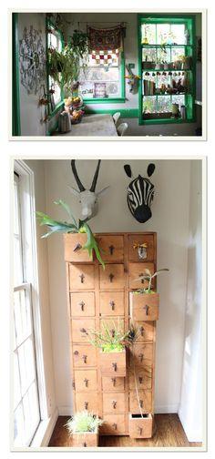 plantas na gaveta.