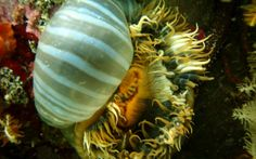 Kelp Forest, Cape Town, Scuba Diving, Trips, Travel, Snorkeling, Traveling, Viajes, Diving