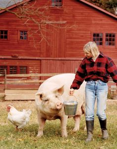 That pig is huge and so cute! How could you eat that!! Art in Tartan - Country Living