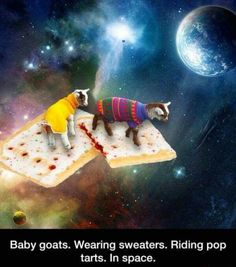 Baby goats. Wearing sweaters. Riding Pop Tarts. In space.