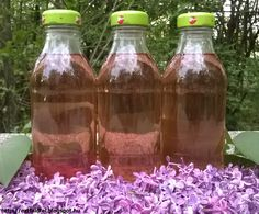 Ezt fald fel!: Orgonaszörp készítése tartósítószer nélkül... Edible Flowers, Creative Food, Preserves, Natural Health, Natural Remedies, Beverages, Dessert Recipes, Food And Drink, Cooking Recipes