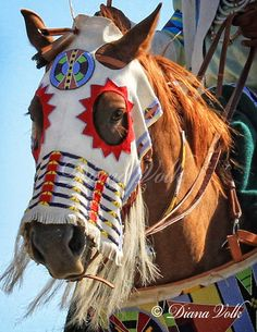 Native American war horse regalia, photo by Diana Volk Native American Horses, Native American Regalia, Native American Beauty, Native American Beadwork, American Indian Art, Native American History, American War, Native Beadwork, Horse Costumes
