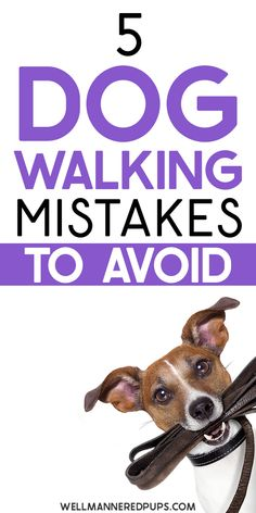 Are you making these dog walking mistakes? Read the 5 key things you should never do while walking your dog!