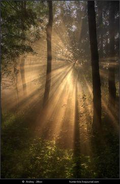 <3 #beauty #nature #light