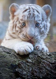 OMG.  So sweet!  But that's a little deceiving...wouldn't like to meet him and his mom in the wild!