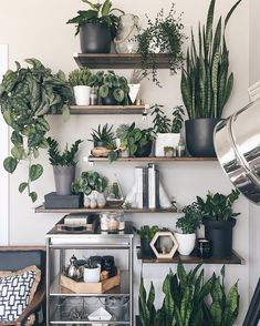 A new Pasadena boutique is dedicated to nothing but indoor house plants Decor, Home And Garden, Room With Plants, Indoor Plants, Home Decor, Plant Shelves, Plant Decor, Plant Wall, House Plants Decor