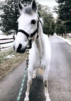 REMMI showing off his freshly pulled mane
