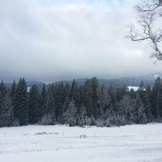 Guten Morgen! #winter im #Schwarzwald