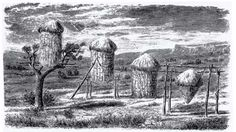 Four styles of California acorn granaries, each suited to its environment. Collective Intelligence, California Missions, Edible Wild Plants, Indian Village, Indian Tribes, Cultural Diversity, Acorn, Nativity, Primitive