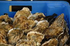 steamed oysters: this was good with beer as steaming liquid looks so yummy! Grilled Oysters, Raw Oysters, Fresh Oysters, Oysters Bienville, Oyster Recipes, Sheet Pan Suppers, Louisiana Recipes, Beach Meals, Contouring