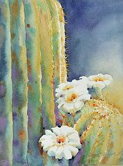 Last Light by Yvonne Joyner Watercolor ~ 20 in. including mat x 14 in. Watercolor Succulents, Watercolor Cactus, Watercolor Paintings, Watercolors, Cactus Painting, Cactus Art, Desert Art, Southwest Art, Painting Inspiration