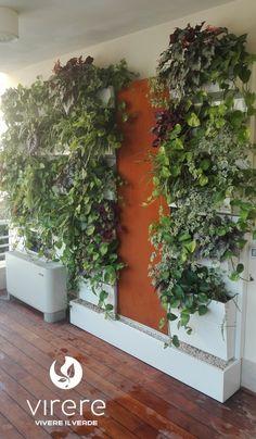 le pareti verticali verdi con piante vere, sono dei veri e propri ... - Piante Per Giardini Verticali