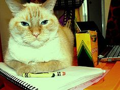 """First thing I found under the search term, """"cat"""" Taylor is definitely making sure I remember him!"""