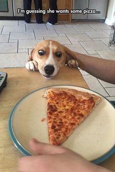 Give me some pizza please.. #dogmemes #funnydogs http://www.petrashop.com/