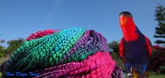 Black Capped Lory Thick and Thin Handspun Yarn by SanDiegoTwist, $19.13