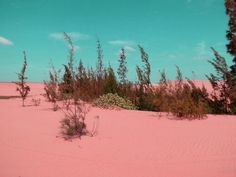 Pink deserts are important