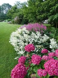 Image result for what to plant with hydrangeas