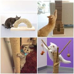 10 ideias de arranhador caseiro para gatos - Dicas Práticas Lamb, Dinosaur Stuffed Animal, Animals, Cat Scratcher, Pet Care, Kittens And Puppies, Painted Bottles, Home Decoration, Birds