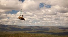 Transporting a rhinoceros via helicopter ride