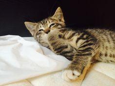 Nice Aww.. Meow.. Cats of Love Photos (82) Check more at http://dougleschan.com/the-recruitment-guru/uncategorized/aww-meow-cats-of-love-photos-82/