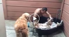 Este Cão Adora a Hora Do Banho, Até Parece Que Está Num SPA http://www.funco.biz/cao-adora-hora-do-banho-ate-parece-esta-num-spa/