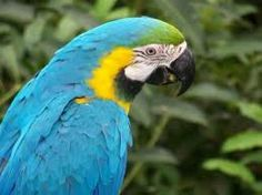 Blue And Yellow Macaw Wallpaper Free Hd Widescreen By Richardson Brook 2017 03