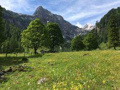 Bunte Almwiesen im Marbachtal in Flachauwinkl #visitflachau #nature #flachau #wandern #wandertouren