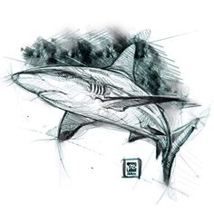 how to draw eyebrows Animal Sketches, Animal Drawings, Cool Sketches, Drawing Sketches, Tattoo Drawings, Art Drawings, Hai Tattoos, Shark Drawing, Shark Art