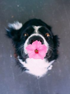 Just an adorable dog- not mine, he would eat the flower in a half second :)