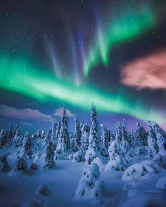 The famous sugar trees & Northern Lights in Finnish Lapland. By @kpunkka