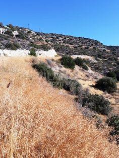 Code No:10156 A residential land for sale in Palodia area in Limassol.