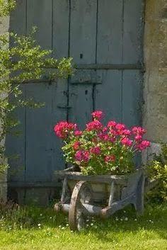 Flowers blooming in a wooden wheelbarrow. Lovely.