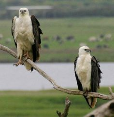 Wild Blue - South West Victoria Wild & Rugged #Sea Birds