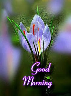 Good morning images with beautiful flowers Good Morning Flowers Quotes, Sweet Good Morning Images, Good Morning Friends Images, Good Morning Romantic, Good Morning Beautiful Pictures, Good Night Flowers, Good Morning Roses, Good Morning Cards, Cute Good Morning