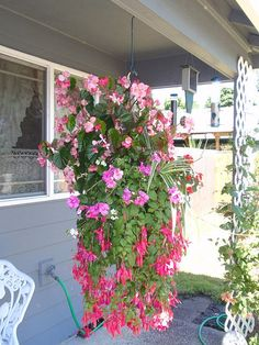 My hanging basket a few yrs ago...my fav fuchsia!