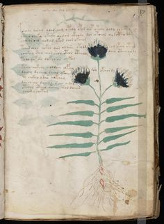 Voynich Manuscript by ginettesqulette, via Flickr