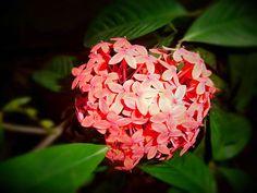 Flower Decorations, Rose, Flowers, Plants, Floral Decorations, Pink, Floral Headdress, Plant, Roses