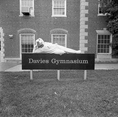 Old Saluki mascot design outside Davies Gym!